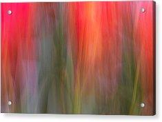 Tulip Waves Acrylic Print