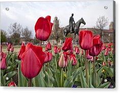 Tulips At Texas Tech University Acrylic Print by Melany Sarafis