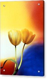 Tulips  Acrylic Print by Etti PALITZ
