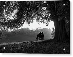 Two Horses At Sunset, Baden Acrylic Print