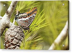 Two-tailed Pasha (charaxes Jasius) Acrylic Print by Photostock-israel
