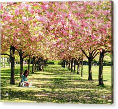 Acrylic Print featuring the photograph Under The Cherry Blossom Trees by Nina Bradica