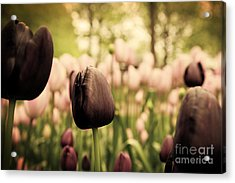 Unique Black Tulip Flowers In Green Grass Acrylic Print by Michal Bednarek