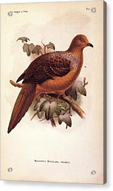 Unknown, Color Lithographs Acrylic Print by Everett