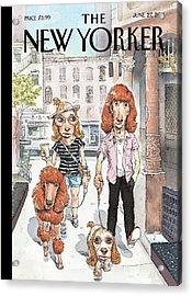 New Yorker June 27th, 2011 Acrylic Print