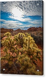 Untitled Acrylic Print by Steve Smith