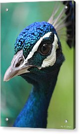 Up Close And Personal  Acrylic Print by Amy Gallagher