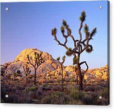 Usa, California, Joshua Tree National Acrylic Print