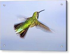 Usa, Colorado, Summit County, Heeney Acrylic Print by Jaynes Gallery