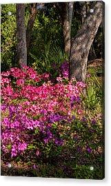 Usa, Florida, Edgewater, Edgewater Acrylic Print by Lisa S. Engelbrecht