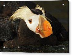 Usa, Oregon, Newport, Oregon Coast Acrylic Print by Rick A Brown