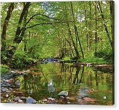 Usa, Oregon, Tillamook State Forest Acrylic Print