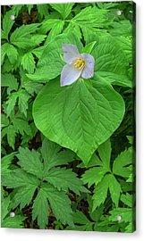 Usa, Oregon, Tryon Creek State Natural Acrylic Print