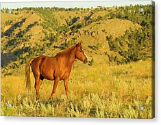 Usa, South Dakota, Wild Horse Sanctuary Acrylic Print by Jaynes Gallery
