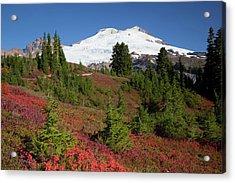Usa, Washington State, Mount Baker Acrylic Print by Jamie and Judy Wild