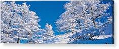 Utsukushigahara Nagano Japan Acrylic Print by Panoramic Images
