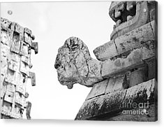 Uxmal Mayan Ancient Turtle Glyph Profile Black And White Acrylic Print by Shawn O'Brien