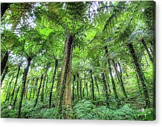 View Of Vegetation In Bali Botanical Acrylic Print