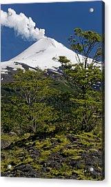 Villarrica National Park, Chile Acrylic Print