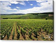Vineyard Of Cotes De Beaune. Cote D'or. Burgundy. France. Europe Acrylic Print by Bernard Jaubert