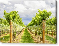 Vineyard Acrylic Print by Patricia Hofmeester