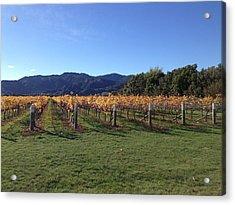 Vineyard Acrylic Print by Ron Torborg