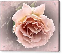 Vintage Rose No. 3 Acrylic Print by Richard Cummings