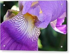 Acrylic Print featuring the photograph Violet by Nora Boghossian