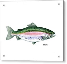 Wallace Brantley Sport Fishing Series Rainbow Trout Acrylic Print by Sharon Blanchard