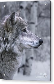 Watching And Waiting Acrylic Print by Sandra Bronstein