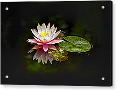 Water Lily Acrylic Print by Bill Barber