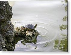 Water Turtle Acrylic Print