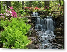Waterfall With Ferns And Azaleas Acrylic Print