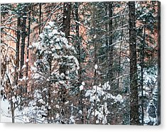 West Fork Snow Acrylic Print by Tam Ryan