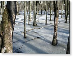 Wetlands In Winter Acrylic Print by Jim West