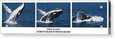 Whale Of A Time Acrylic Print