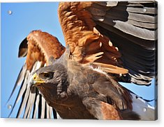 What A Beauty Acrylic Print by Paulette Thomas