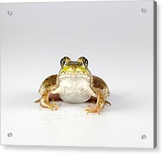 Acrylic Print featuring the photograph What You Looking At? by John Crothers