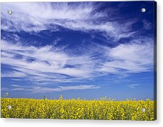 Where Land Meets Sky Acrylic Print by Keith Armstrong
