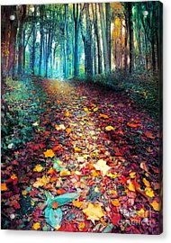 Where Leaves Gather Acrylic Print