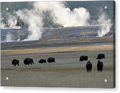 Where The Buffalo Roam Acrylic Print