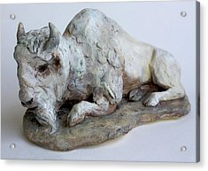 White Buffalo-sculpture Acrylic Print by Derrick Higgins