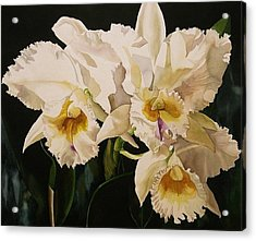 White Cattleya Orchids Acrylic Print