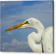 White Egret Acrylic Print by Carolyn Bistline