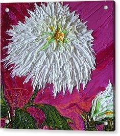 White Mum Acrylic Print by Paris Wyatt Llanso