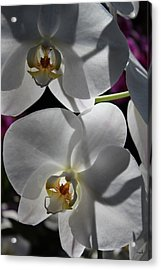 White Orchid Two Acrylic Print by Mark Steven Burhart