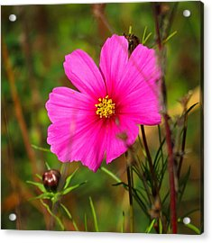 Acrylic Print featuring the photograph Wild Flower by Eric Switzer
