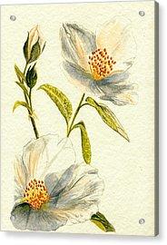 Wild Roses Acrylic Print by Donna Turbyfill