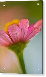 Acrylic Print featuring the photograph Wildflower - Bali by Matthew Onheiber