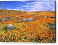 Wildflowers At The California Poppy Acrylic Print by John Alves